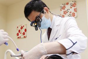 虫歯治療の歯科医師